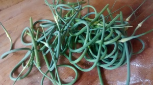 pile of garlic scapes that need to be prepared for the freezer