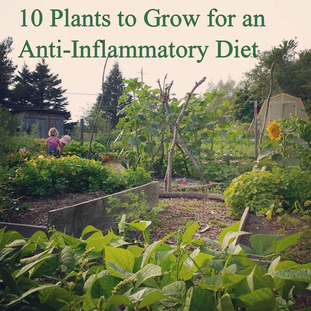 antiinflammatory-garden