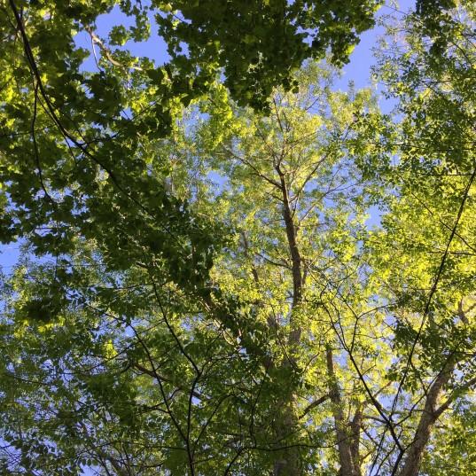 summer-trees