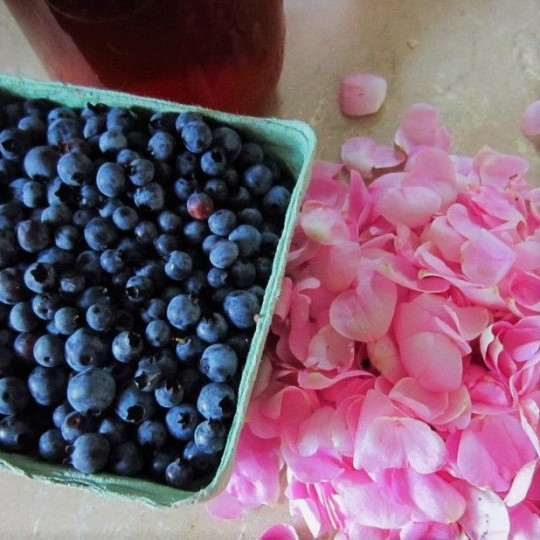 wild blueberries and wild roses