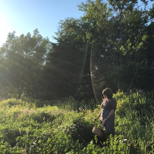 wild overgrown field