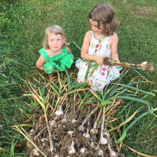 garlic-harvest-kids.jpeg