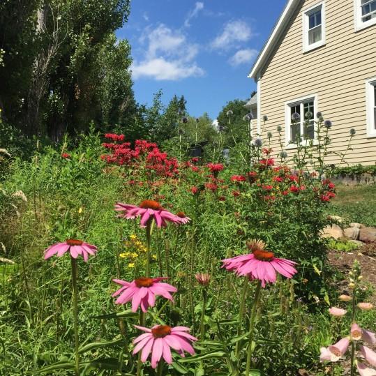 homestead-flowers.jpeg