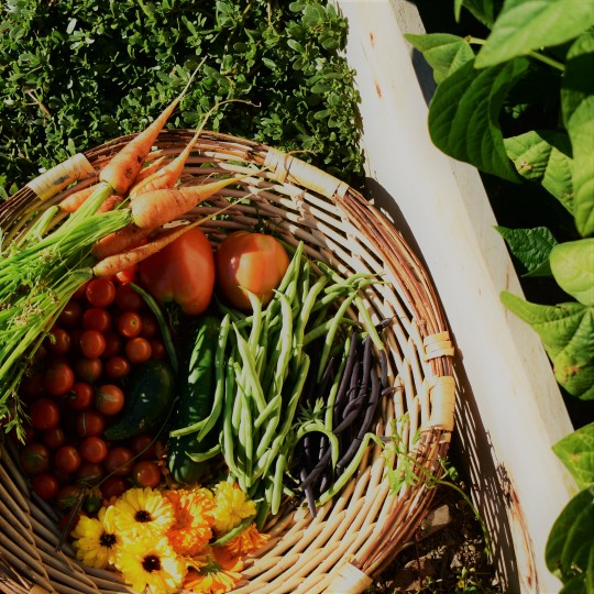 abundant garden harvest